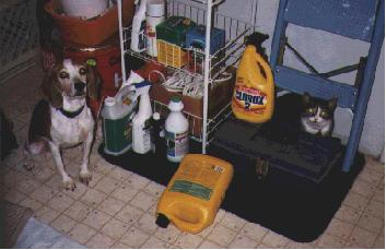 Poisoning & Pets | West Virginia Poison Center